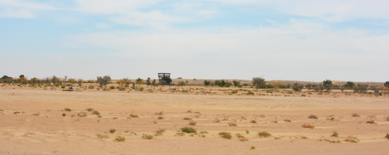 Al Marmoom Ultramarathon   THE WORLD'S LONGEST DESERT ULTRA-RUN on